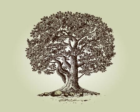 Drzewo dÄ™bu