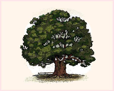 cartoon trees: Oak tree