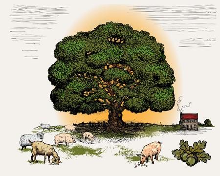 plats: Oak tree