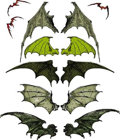 vulture: Wings Illustration