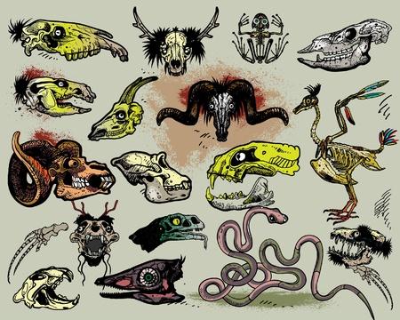 Squelettes d'animaux Vecteurs