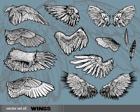 bird of prey: set of  Wings