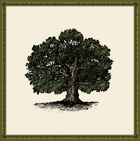 oak leaves: oak tree Illustration