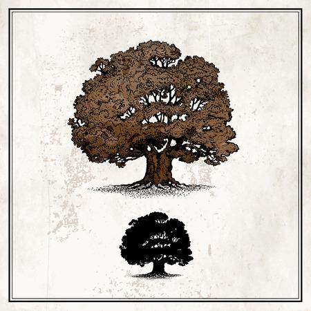 Dąb drzewa Ilustracje wektorowe