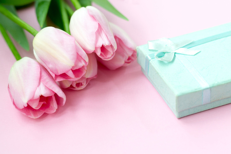 Pink tulips on the pink background with gift box. Flat lay, top view. Valentines background.