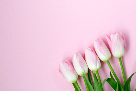 Pink tulips on the pink background. Flat lay, top view. Valentines background. Stock Photo