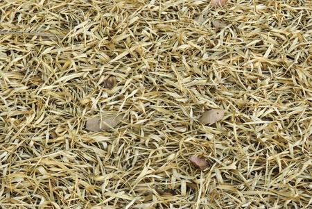 Dry bamboo leaf background