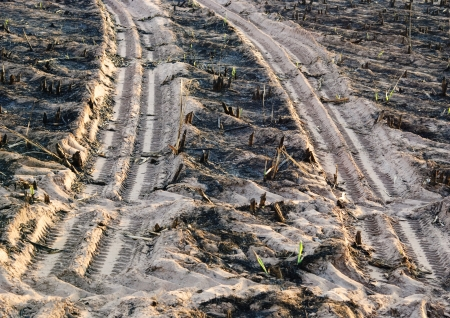 Truck foot print in the burn sugar cane farm photo