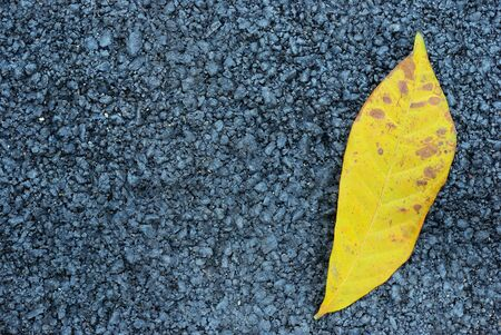 The yellow leaf with asphalt texture background photo
