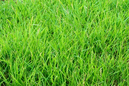 Close up on green grass texture background