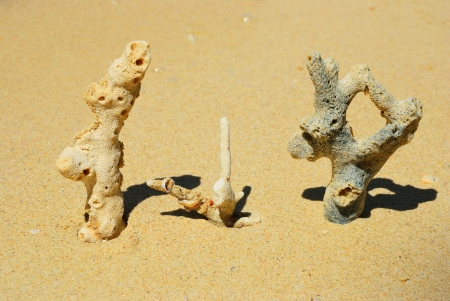 Three coral on the beach with yellow sand background photo