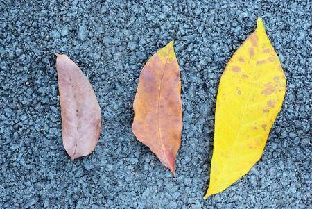 tripple: Tripple dry leaf put on asphalt texture background