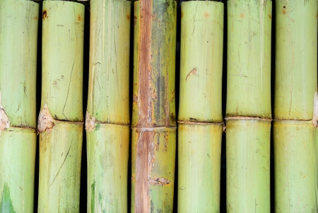 A lot of bamboo separated to wall background photo