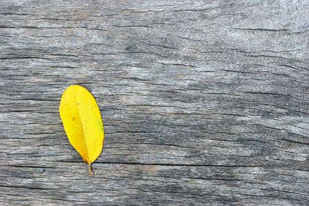 Texture of the old wood with yellow leaf