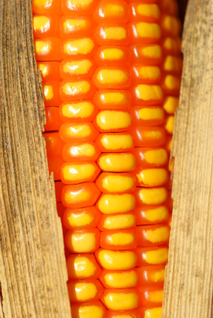 Dry corn for the animal feed industry Stock Photo - 24400869
