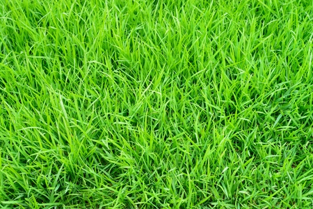 Beautiful green grass for the best nature background