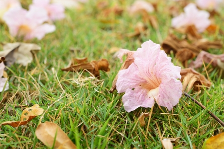 path cottage garden: Close up on light purple flower on the green grass