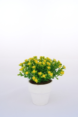 Yellow flower decoration on isolated background for graphic designer photo