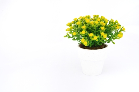 Yellow flower decoration on isolated background for graphic designer on isolated background use for graphic designer photo