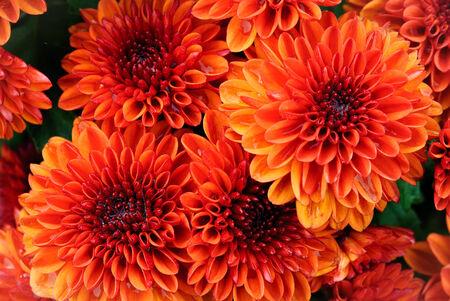 Orange flower texture background
