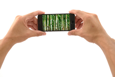 Mobile phone with hand ready to capture the sugarcane