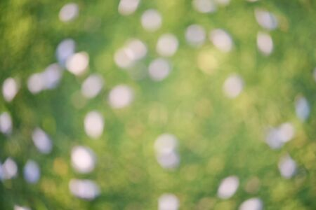Blur violet flower with the green grass abstract background Stock Photo