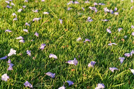 Violet flower on the green grass background