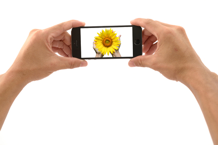 Mobile phone with hand ready to capture the sunflower