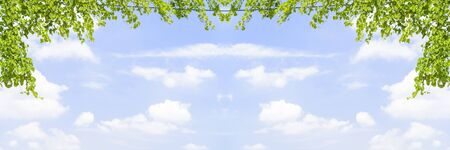 climbing frames: Green leaves frame with blue sky and cloudy panorama