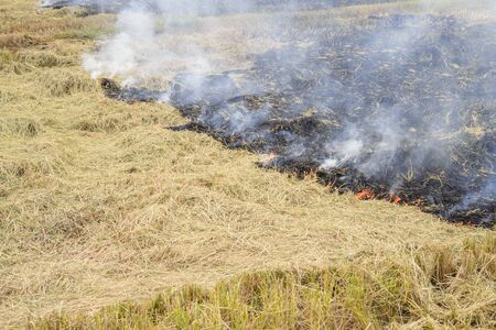 Flaming straw in the rice field; Global warming problem; Thailand Stock Photo