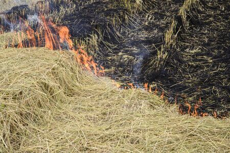 Flaming straw in the rice field; Global warming problem; Thailand rice field