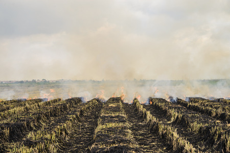Flaming straw in the rice field by farmer; Global warming problem; Thailand Stock Photo