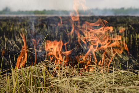 Flaming the straw in the rice field; Global warming problem; Flame texture