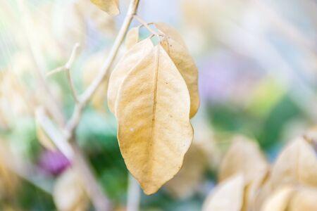 dried leaf: Dried leaf, Beautiful nature background. Stock Photo
