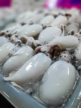 Fresh raw cuttlefish. Raw squid with ice in Seafood Market Stall