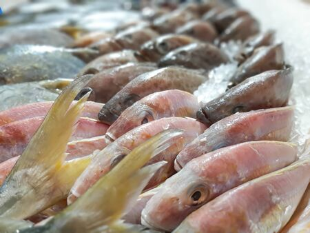 Close up Raw Fresh Fish Chilling on Ice in Seafood Market Stall Stock Photo