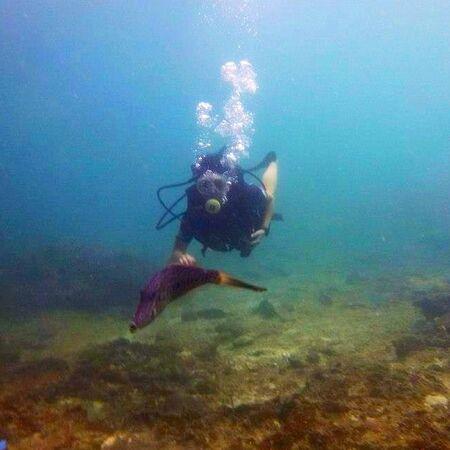 aqua: Scubadiving
