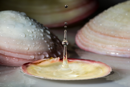 relaxant: Water drop in sea shell