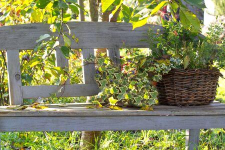 garden bench: Romantic garden bench