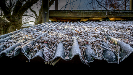 transience: autumn leafs on frosty roof