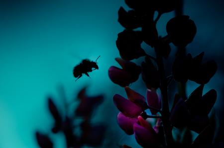 diligente: Recoger el polen de abeja en vuelo