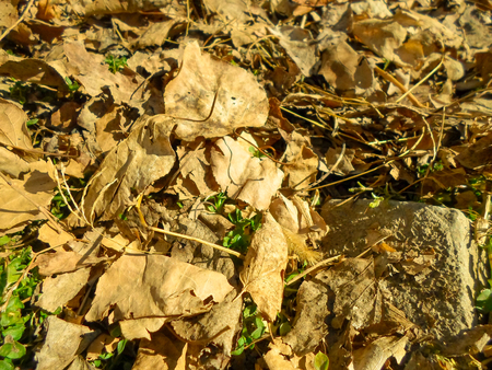 Green grass among the dry leaves and stones, autumn season Banco de Imagens