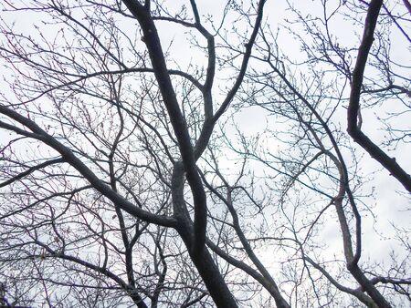dry tree against the sky