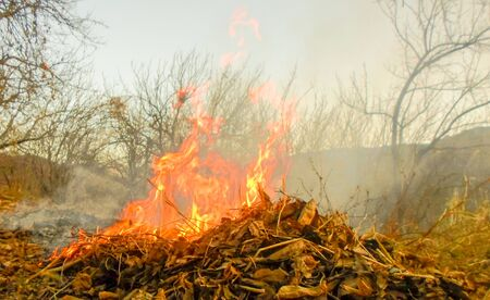bonfire of dry leaves and dry grass. autumn grass cleaning. ash and smoke from the fire. Archivio Fotografico