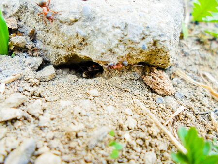 ants and anthill on the ground under the stone. summer insects