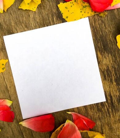 yellow apricot leaves and rose petals on a wooden board and a white sheet of paper for writing. place for text