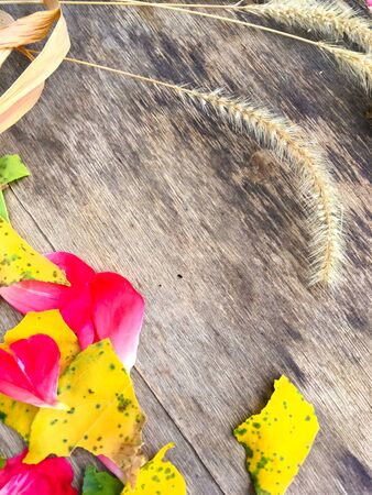 Yellow ear of wheat and yellow apricot leaves and rose petals on a wooden board, place for text 写真素材
