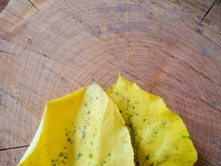 yellow leaves of apricot tree on a wooden board, autumn leaf fall. Autumn concept and place for text. 写真素材