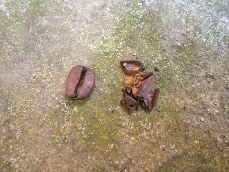 large grains of coffee on a concrete surface. broken and whole coffee beans. 2 grains, one broken