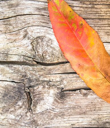 yellow leaves of an tree on a dry concrete wall, autumn leaf fall. Autumn concept